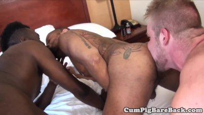 Black bear gets rimmed and anally slammed